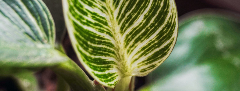 Wish you could really communicate with your plants? Listen to this …